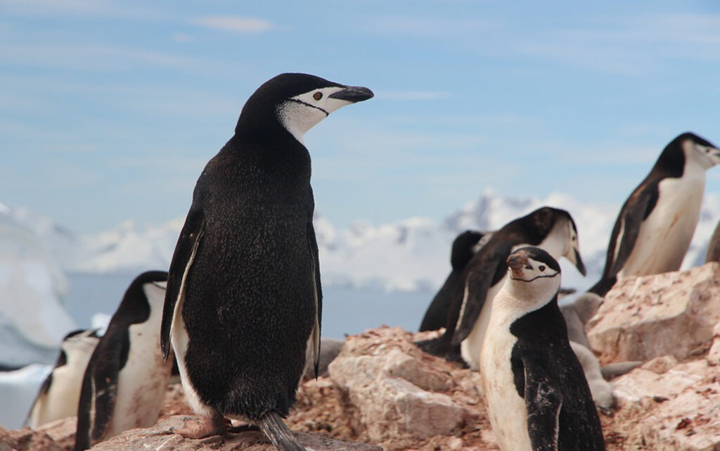 Rok a půl mezi tučňáky – přednáška
